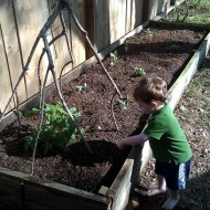 Gardening with Containers and Raised Beds