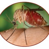Give Mosquitoes The Old 1-2-3 Approach With Cutter