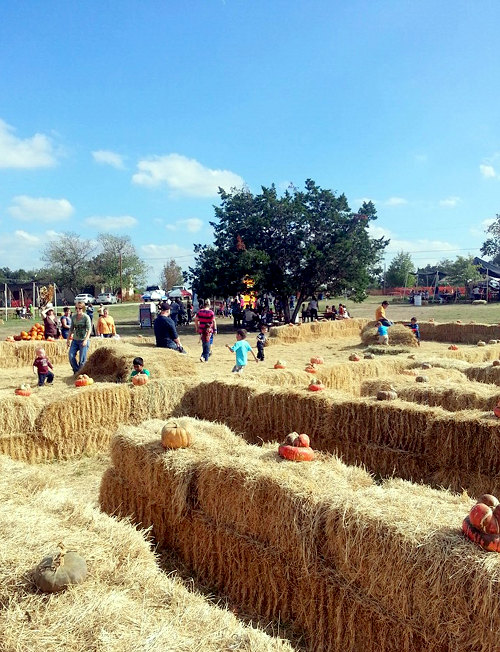 hill country pumpkin patch