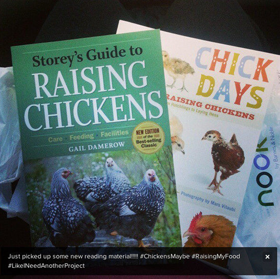 rasing chicken books