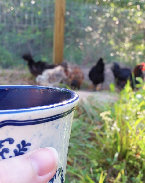 Chickens and Coffee