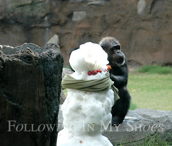 Snow at the Houston Zoo