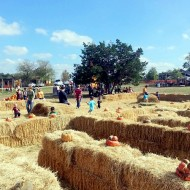 The Pumpkin Patch Is Alive and Well and Living in the Hill Country of Texas.