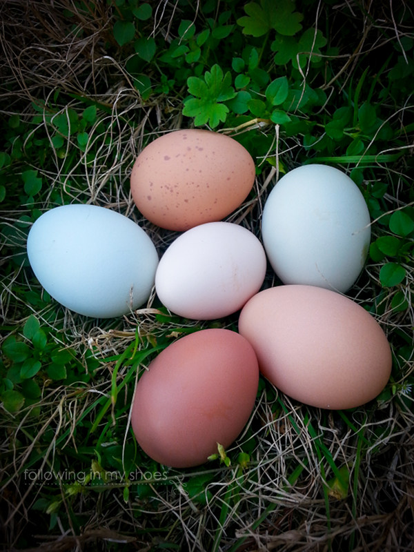 Natural Colorful Backyard Chicken Eggs from Following In My Shoes