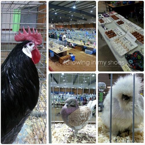Poultry at Bluebonnet Classic Poultry Show