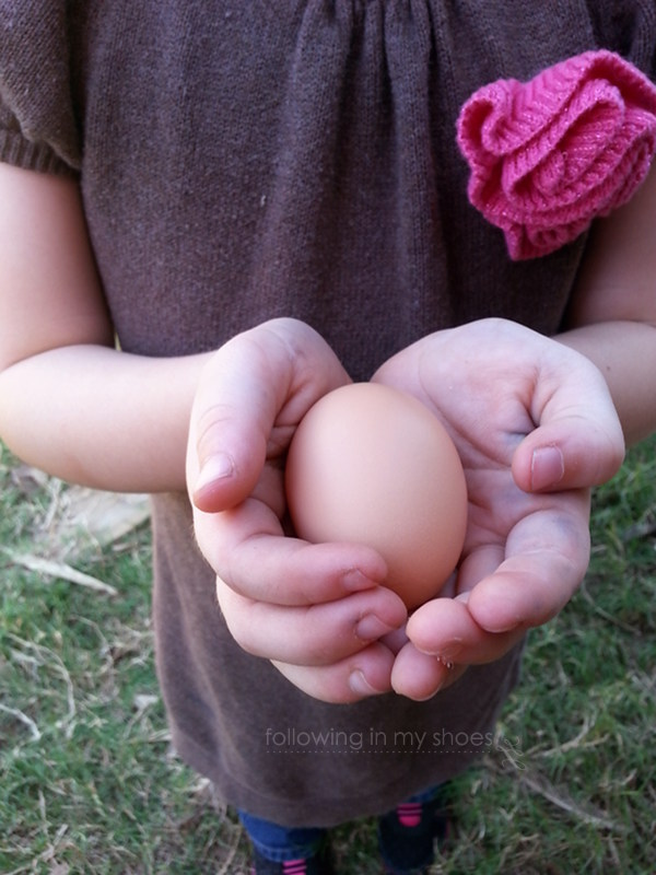 brown chicken egg grown in a backyard coop